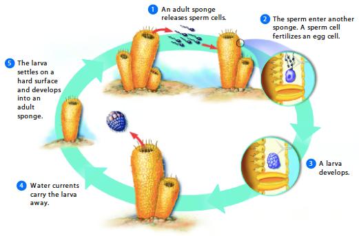Unit 6  Aquatic Ecology  Seventh Grade Science