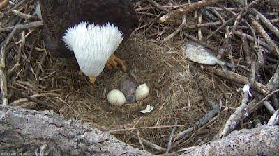 2911 Eagles Watch Dr Davenport Ia 52807