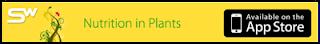 Werkz Plants