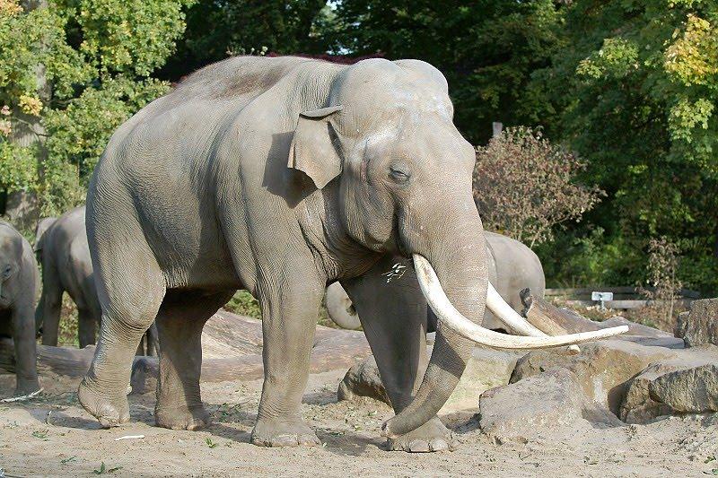 ใกล้การสูญพันธุ์ - Endangered Wiedeife สัตว์ป่าไกล้สูญพันธุ์