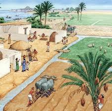 วิวัฒนาการร่ม
