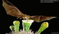 www.bats4kids.org