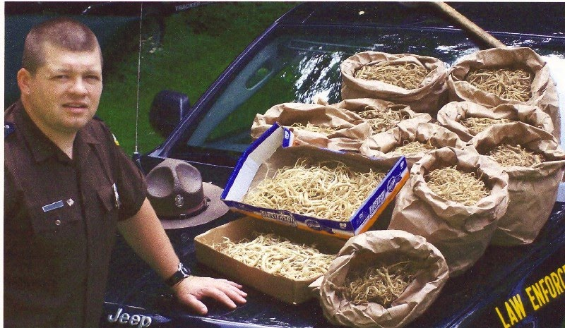 Hunting selling ginseng facts for West virginia out of state fishing license