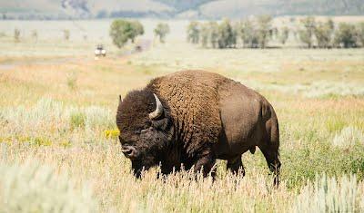 wildlife fauna temperate grasslands