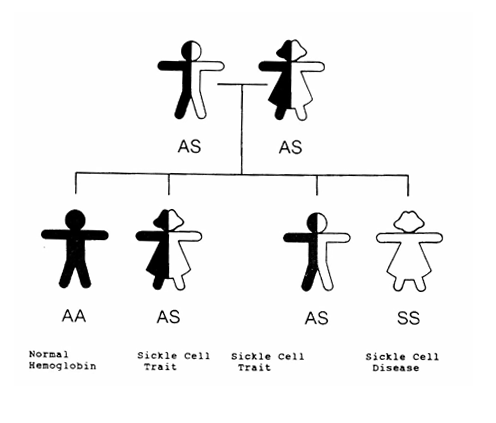 Diagram Of A Sickle Cell on system diagramming