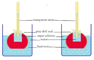 experiment to show osmosis