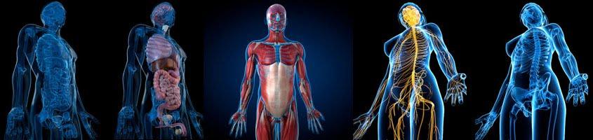Gamble: Anatomy & Physiology