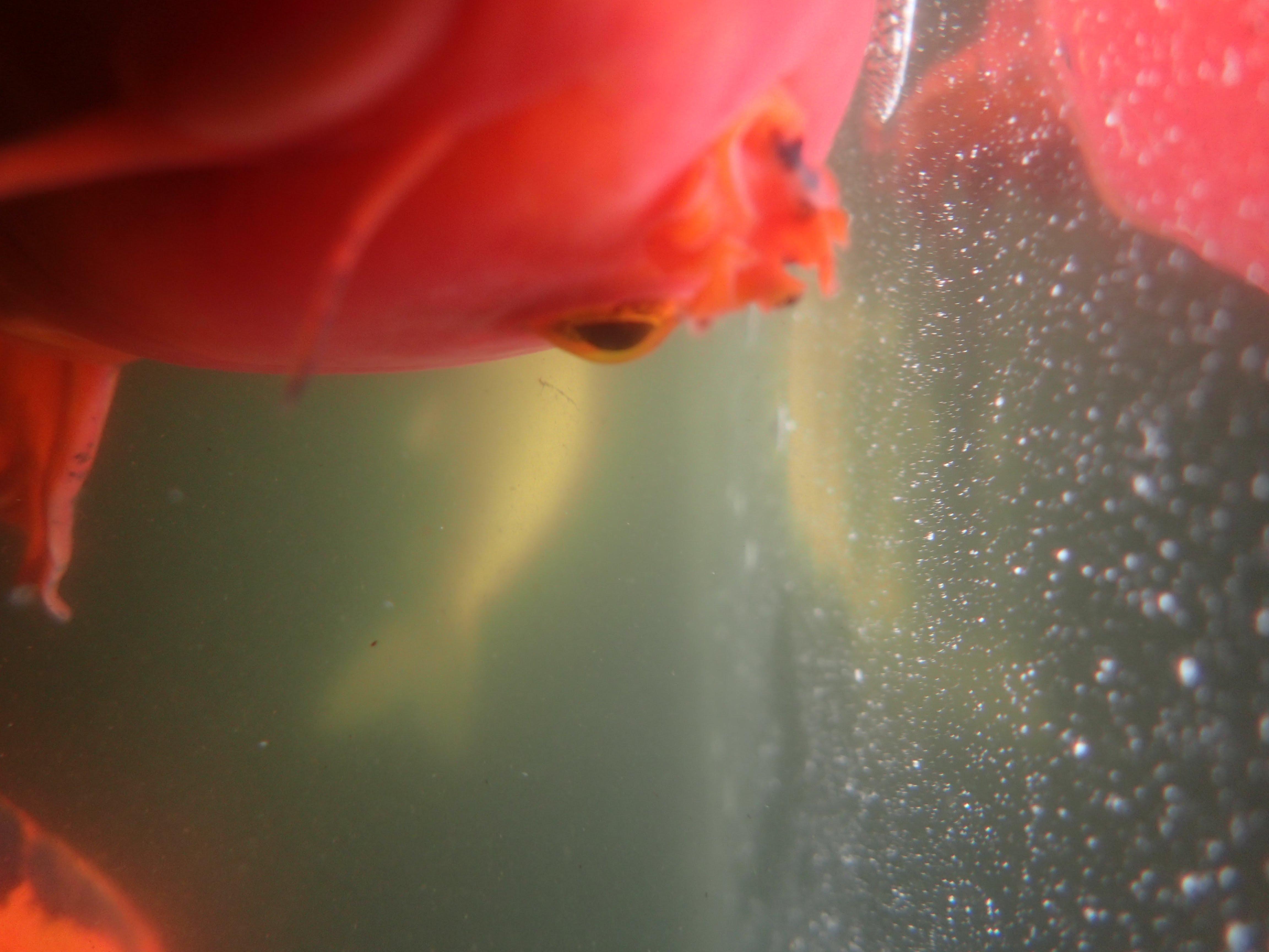 1 Fish, 2 Fish. (Primary color photo) - Gavin Harringon\'s SLAM 19c site