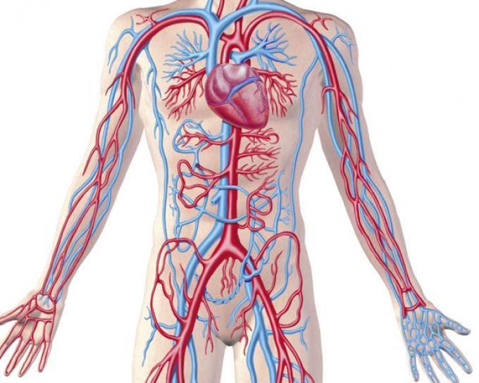 Sistema Cardiovascular - Clínica Propedéutica en Fisioterapia