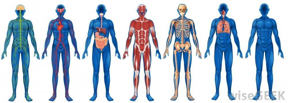 Powerpoints And Materials 1 Human Body Systems