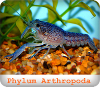 https://sites.google.com/a/srk.ac.th/biologysrk/phylum-arthropoda