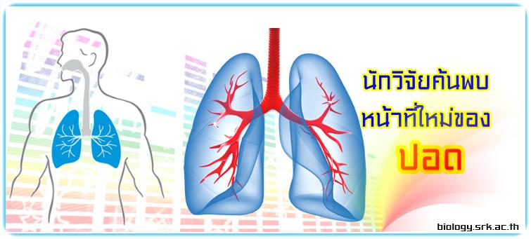 https://sites.google.com/a/srk.ac.th/biologysrk/bio-news