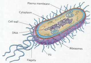 Archaebacteria and Eubacteria - Totally Crazy Science Project ...