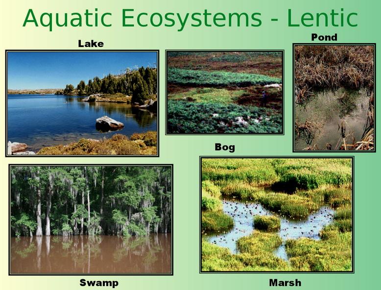 freshwater aquatic ecosystem Aquatic conservation: marine and freshwater ecosystems is an international journal dedicated to publishing original papers that relate specifically to the.