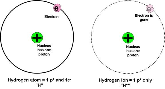 Proton Neutron Electron Location