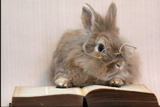 Image result for reading to rabbits