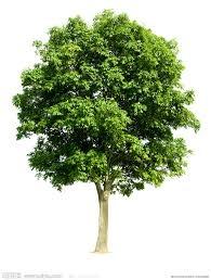 樹的種類- 樹的奧妙
