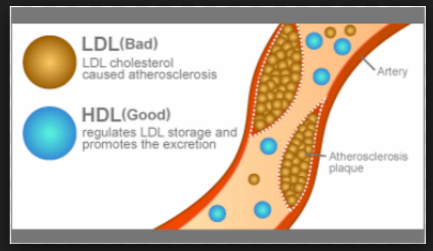 Biomedical Hdl And Ldl