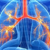 http://www.lifeextension.com/protocols/respiratory/copd/Page-01