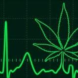 https://herb.co/marijuana/news/heart-cardiovascular-problems