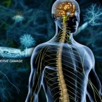 https://www.google.com/url?sa=i&source=images&cd=&cad=rja&uact=8&ved=2ahUKEwiX192UmPPhAhUwxosKHVMYBNIQjhx6BAgBEAM&url=https%3A%2F%2Fwww.webmd.com%2Fmultiple-sclerosis%2Fss%2Fslideshow-multiple-sclerosis-overview&psig=AOvVaw1iSDmdPGLEqBj27ohmmHBK&ust=1556554662594916