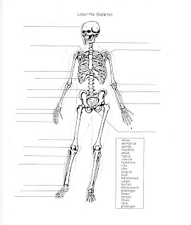 skeletal system essay Study flashcards on skeletal system questions at cramcom quickly memorize the terms, phrases and much more cramcom makes it easy to get the grade you want.