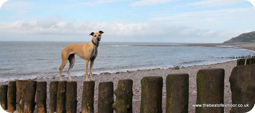 dog walk on Exmoor