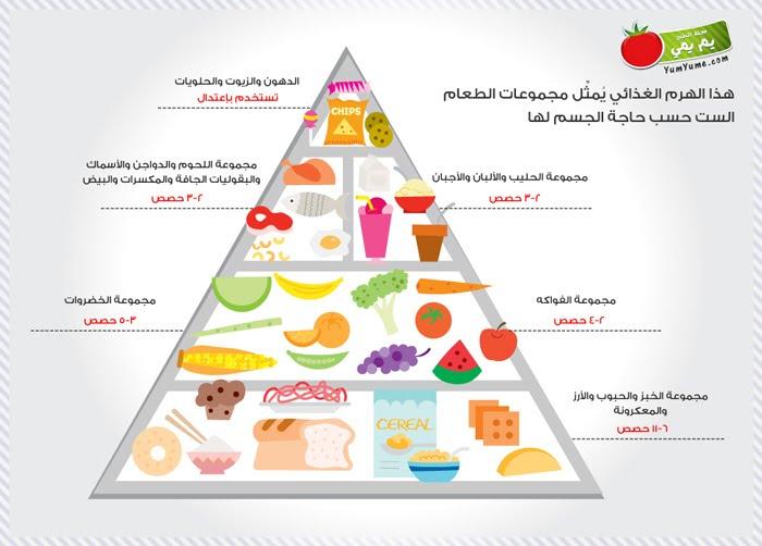 معلومات عامة الهرم الغذائي