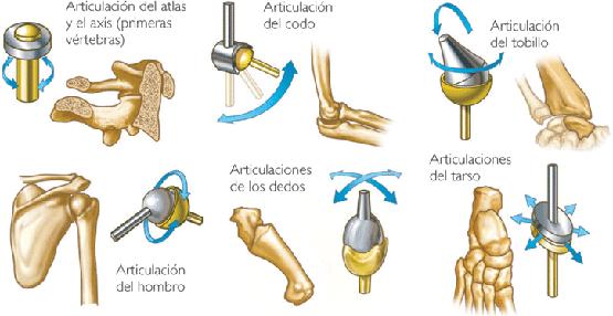 Clasificación de las articulaciones - artromed