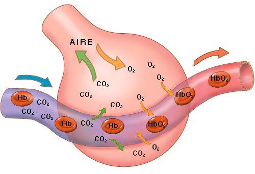 Intercambio Gaseoso Aire Sangre Tabaquismo 2 0