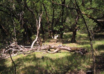 Disease increases woody debris accumulation