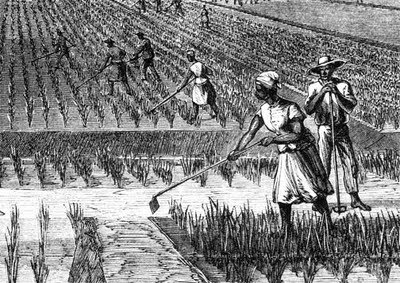 African slaves 39 contribution in building america for African crops and slave cuisine