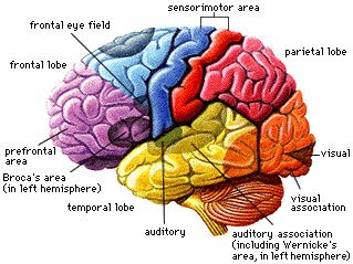 Ch 2 neuroscience and behavior coach allen ap psych ch 2 neuroscience and behavior ccuart Choice Image