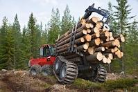 Лес для строительства дома