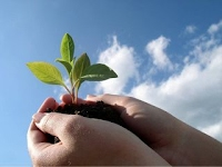 "Программа ""Развитие лесного комплекса"""