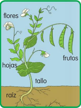 ver plantas ornamentales las plantas wiki de primero