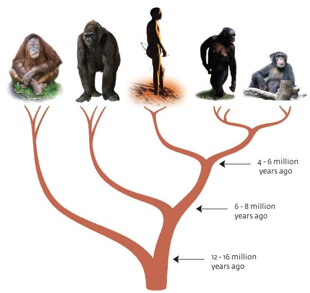 VIDEO HELP Evolving Ideas: Isn't Evolution Just a Theory? Length: 6:15 ...