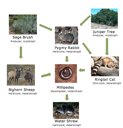Food Web - Great Basin National Park