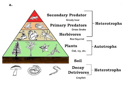 trophic levels the lake district