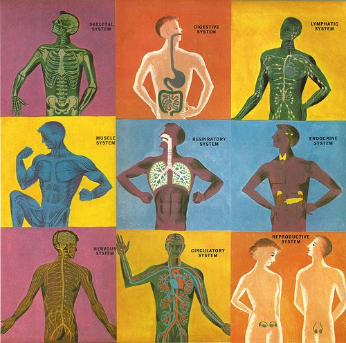 Diseases/Disorders of the Body Systems (Dr. I.) - WFHS Library