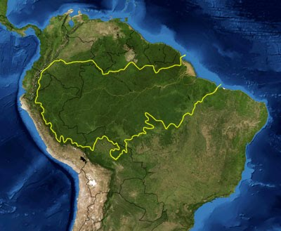 3.- Amazon rainforest - English projects