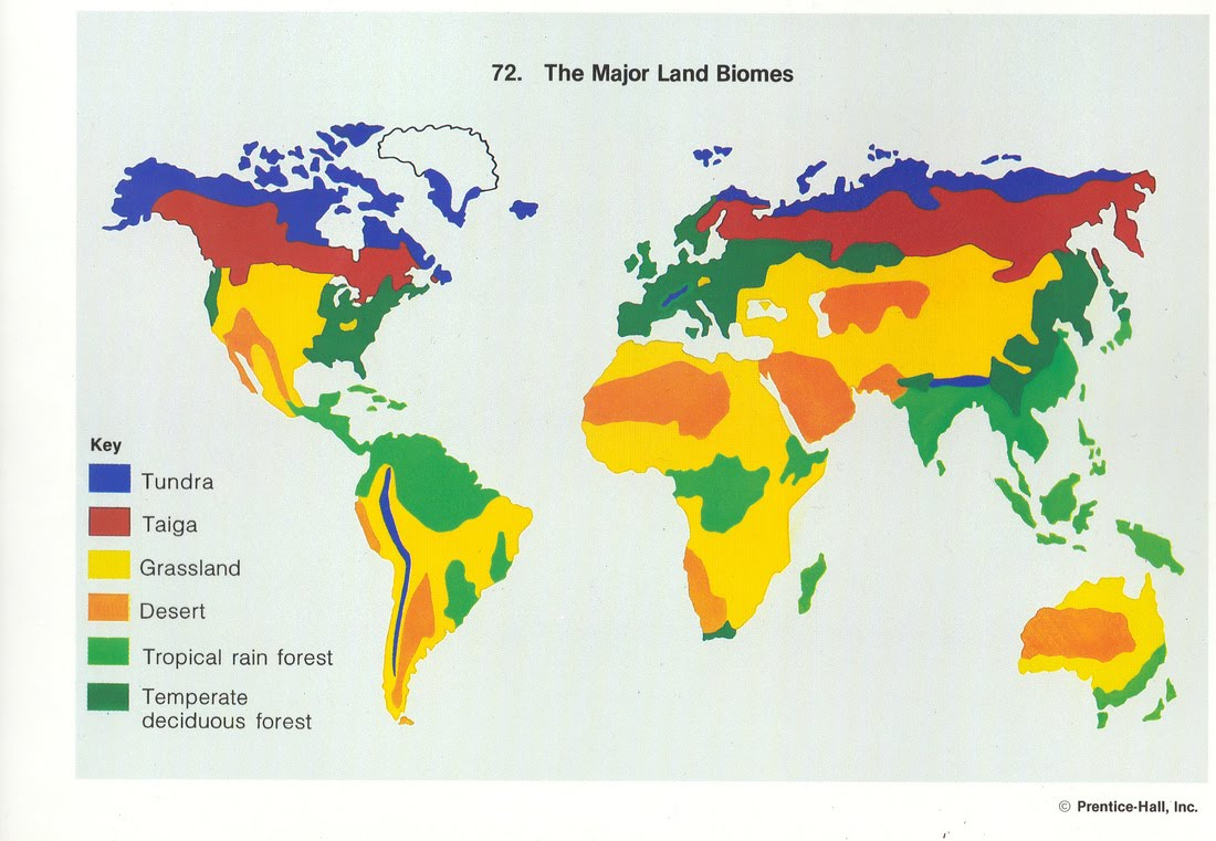 1 biomes of the world english projects