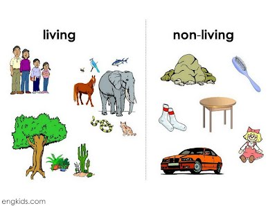 What are characteristics that all living things share?