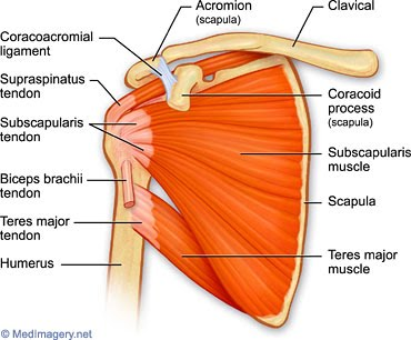 how to build infraspinatus muscle