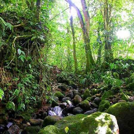 Tropical rainforest detritivores