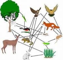 7 3 1- Food Chain and Food Webs - 7th Grade Life Science