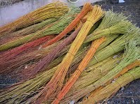 Various types of willows