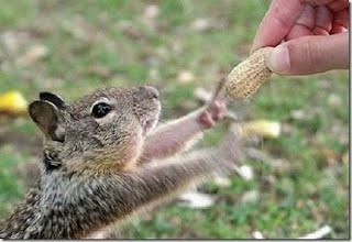 Squirrels as pets - All About Tree Squirrels