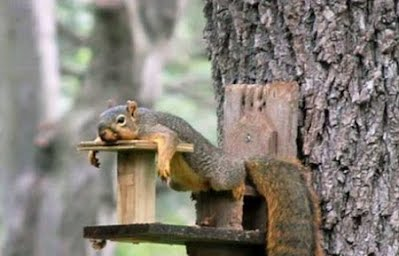Behavior - All About Tree Squirrels