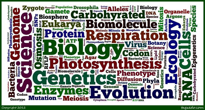 ap biology essay questions on enzymes The questions below are from previous ap biology exams and  you are not graded on your ability to format an essay  practice free response question: biochemistry.
